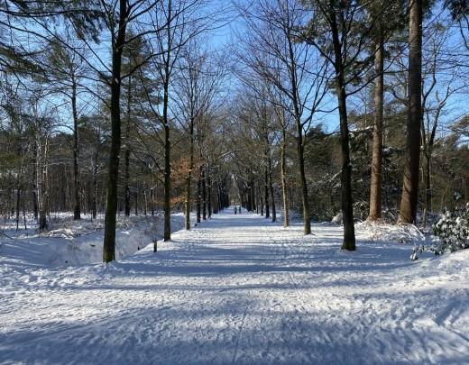 Winter in Tilburg - Foto 5