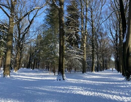 Winter in Tilburg - Foto 4