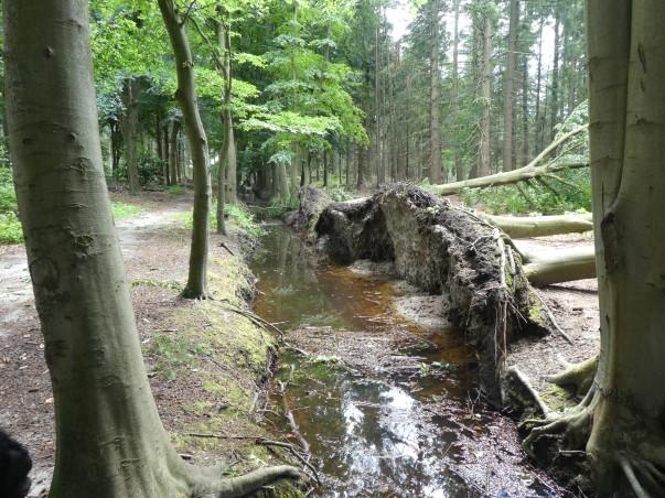 stormschade Tilburgse bossen