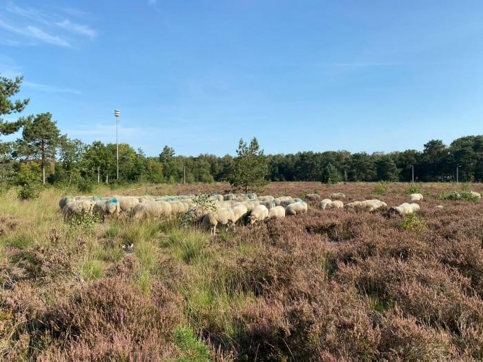 12 september 2 x boscafé Tilburgs bos