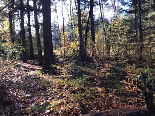Herfst in het Tilburgse bos
