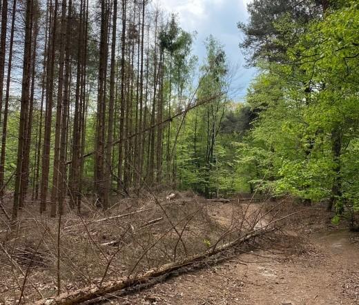 Aanpak letterzetter aangetaste bomen