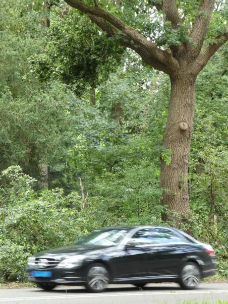 stormschade Tilburgse bossen - loshangende takken