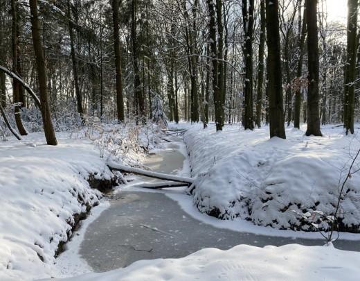 Winter in Tilburg - Foto 6