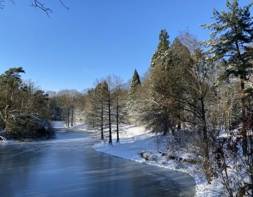 Winter in het Tilburgsbos