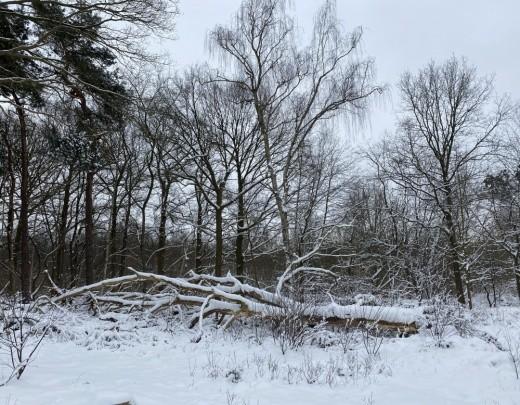 Winter in Tilburg - Foto 2